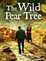 [土] 野梨樹 (The Wild Pear Tree) (2018)[台版字幕]