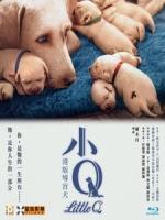[中] 再見了!小Q (Little Q) (2019)[台版字幕]